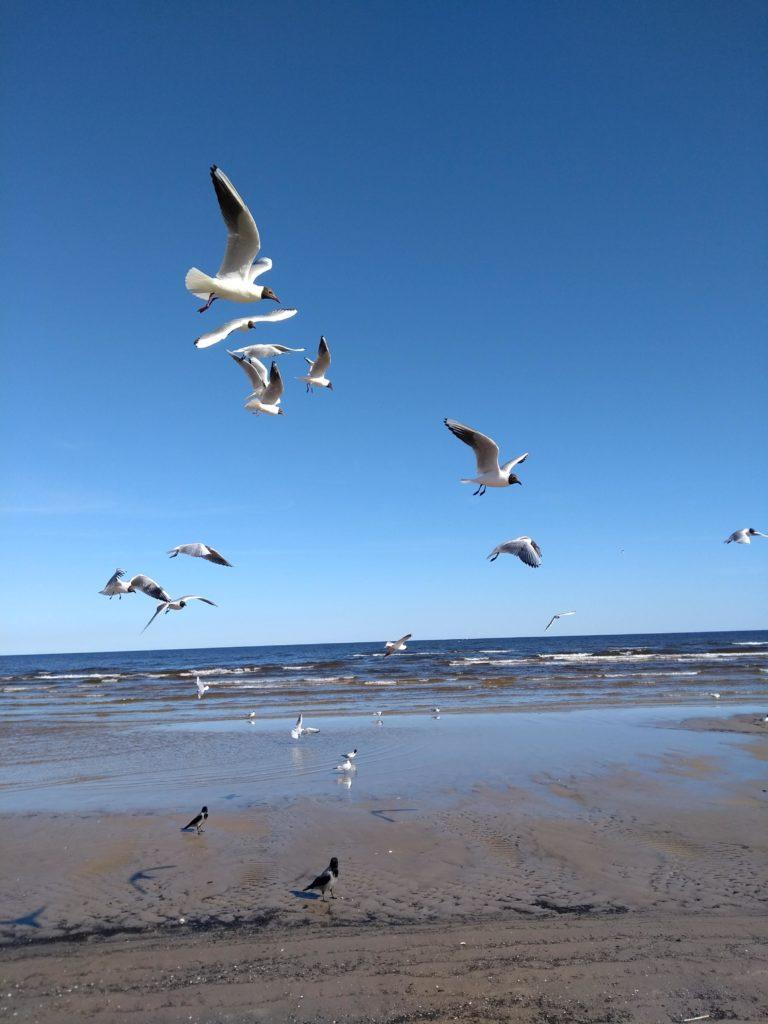Łotwa plaża